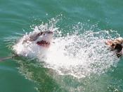 Would Cage Dive With Great White Sharks? Did! (Video Evidence)