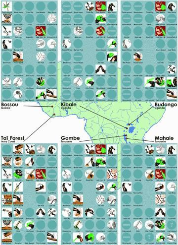 Some of the chimp cultures currently identified, along with the behaviours practised by each (you're probably going to want to click to see a bigger image)