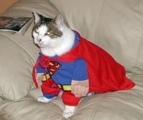 The World's Top 10 Best Images of Animals Dressed Like Superman