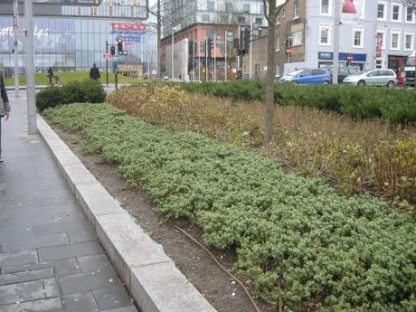 General Gordon Square, Woolwich - Planting Edge