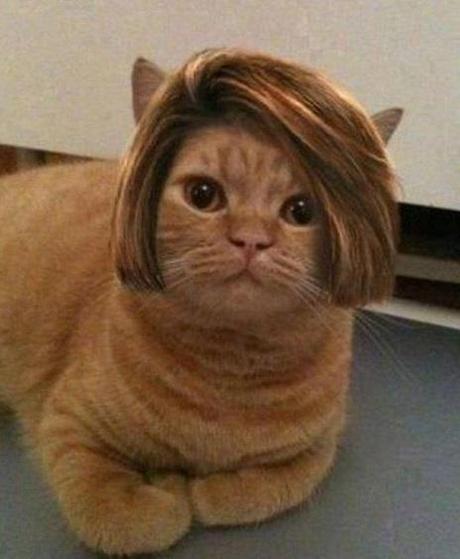 The World's Top 10 Best Images Of Cats Wearing Wigs