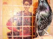 Creation: Amazing Murmur Starlings
