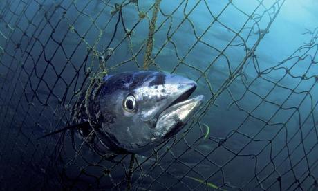 Tuna Truth