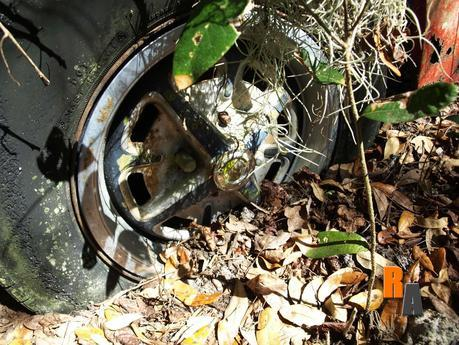 1960s mg midget mkii central florida gabel collection rotting in style