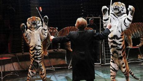 Russia Moves To Protect Entertainment Animal Abuse
