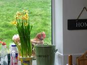 Chicken Window, Spade Hand