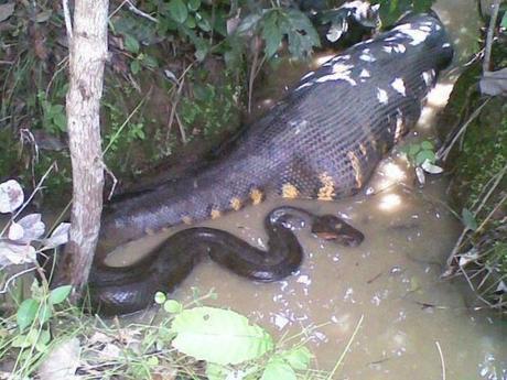 Rainforest Animal Community