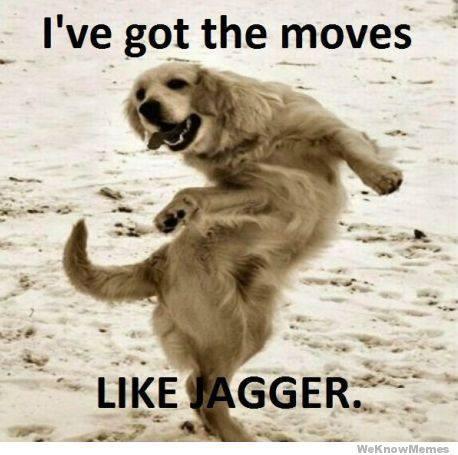 #WonderfulWednesday - Oldies but Goodies Dog Memes - Paperblog