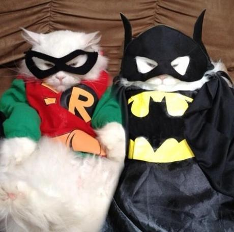 The World's Top 10 Funniest Animals Dressed as Batman