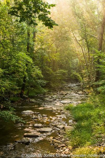 USA: New Jersey, Mountainville Rockaway Stream, a tributary of the South Branch of the Raritan River, after spring floods in the early morning mist of summer