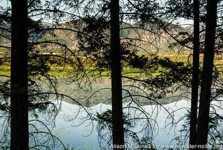 Canada: British Columbia, Kootenay Rockies, Columbia River Basin, Wilmer, view across Columbia Wetlands at sunset