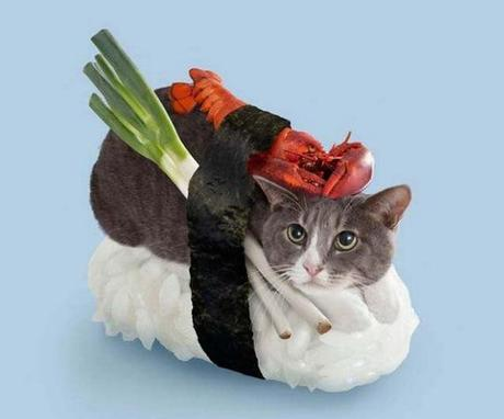 The World's Top 10 Best Images of Cats Dressed as Food