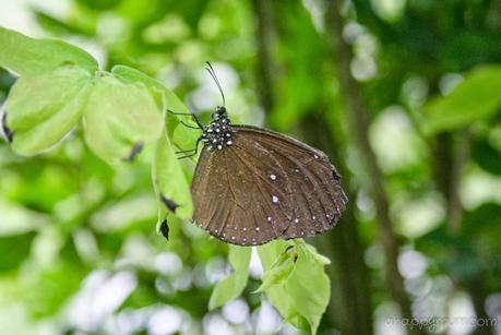 Wait for me, don't fly away - Visit to Penang Butterfly Farm