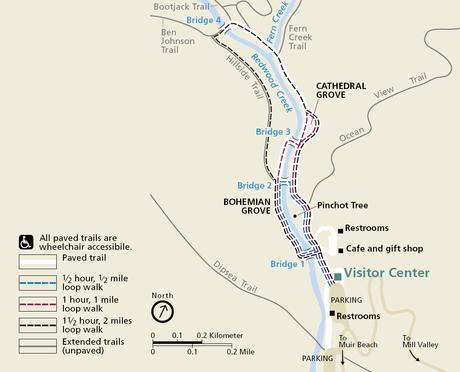 Muir Woods trail map