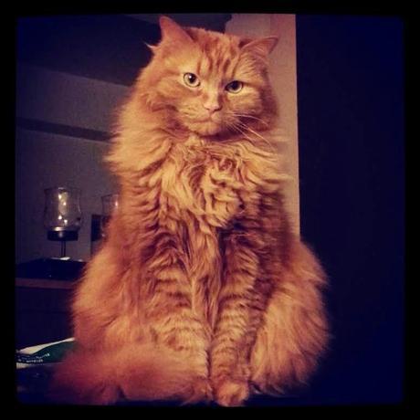 Extraordinary Pet: Nova
