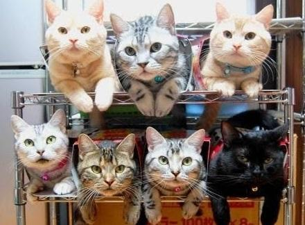 The World's Top 10 Best Ways to Organize Cats