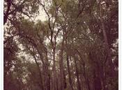 Wonderful Family Getaway: Lilly Pilly Cottage Farm Stay Gidgegannup, Western Australia