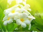 Springtime Florida Neroli… Favorite Soul Medicine