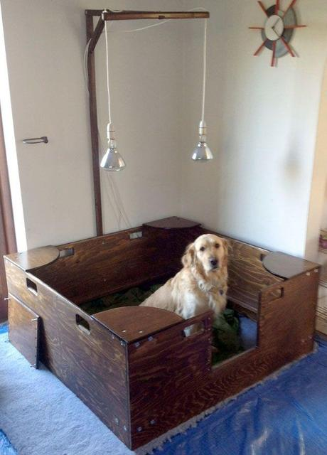 How To Build Breeding Stand For Dogs
