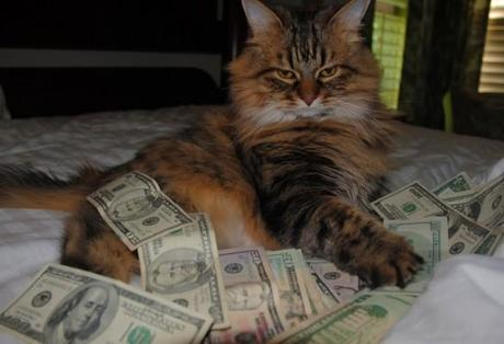 The World S Top 10 Best Images Of Cats With Money Paperblog