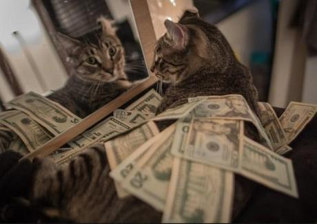 The World's Top 10 Best Images of Cats With Money