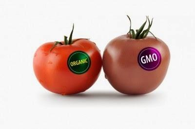 How GMOs Contribute to Weight Gain