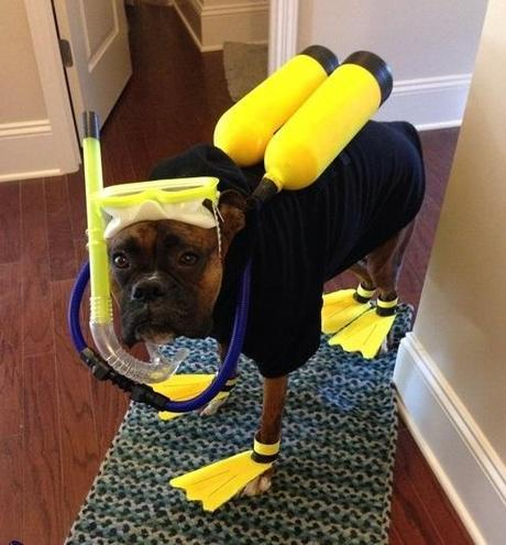 The World's Top 10 Funniest Images of Animals in Scuba Diving Gear
