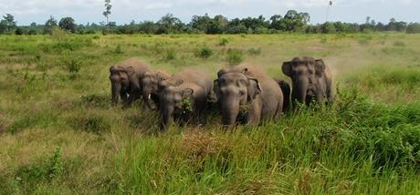 Ardent Measures to Save Captive Elephants