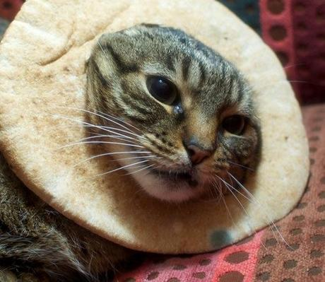 The World's Top 10 Best Images of Cats In Food