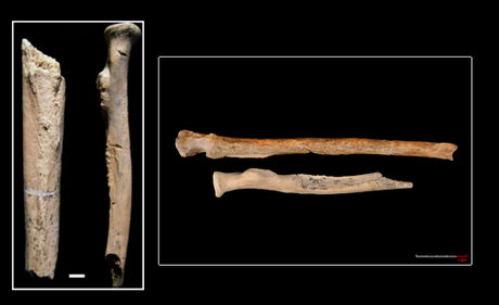 The arm and leg bones of OH-80