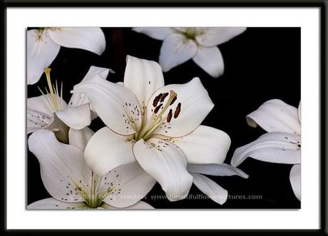 Eyeliner Lily © 2009 Patty Hankins