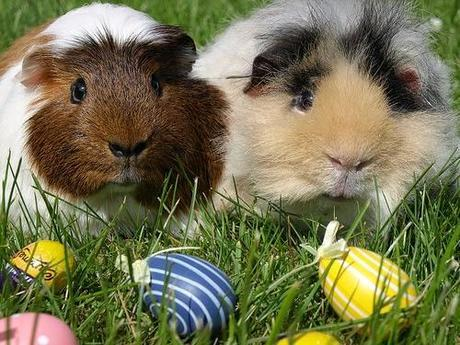 Adorable Easter pets
