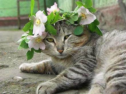 The World's Top 10 Best Images of Cats Wearing Easter Bonnets