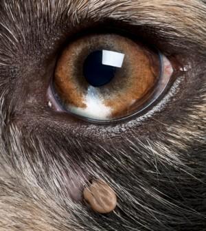 Can I Use Eye Wash On My Dog