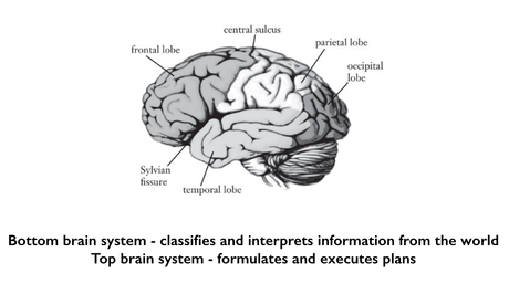 Top Brain, Bottom Brain - a User's Manual from Kosslyn and ...