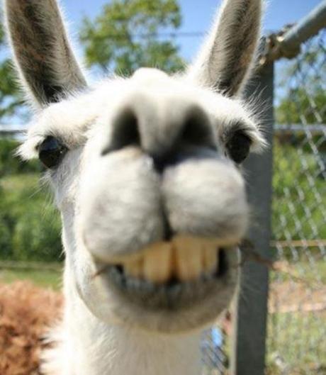 The World's Top 10 Best Animal Selfies