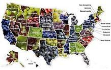 The United Grapes of America