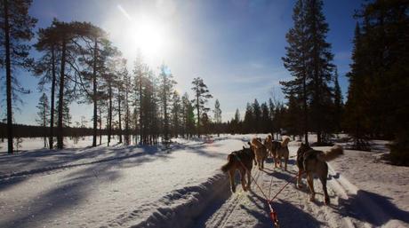 huskysafari 04 VIDEO: Husky Safari in Lapland