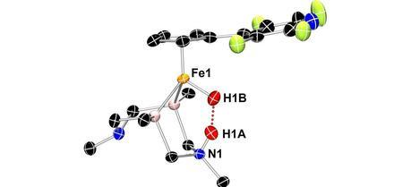 Neutron crystallography shows this iron catalyst gripping two hydrogen atoms (red spheres). This arrangement allows an unusual dihydrogen bond to form between the hydrogen atoms (red dots).