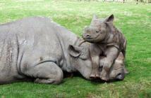 S Africa Rhino Horn Trade