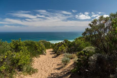 sandy walking track cape otway great ocean walk