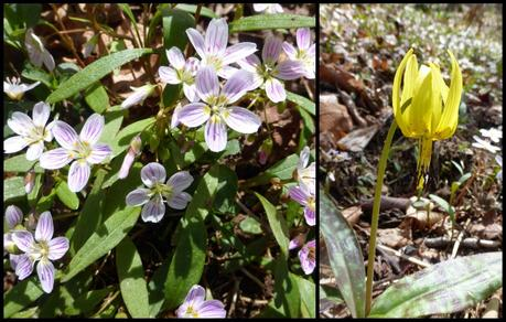 Day 10: Early Spring In The Smokies
