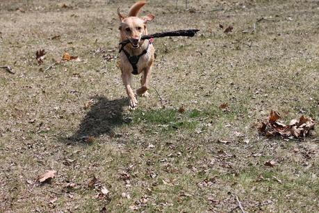 Photo Story: Fetch!