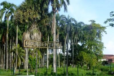 palmentuin paramaribo, suriname