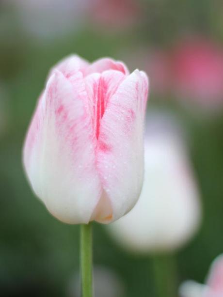 Tulip Gander's Philosophy