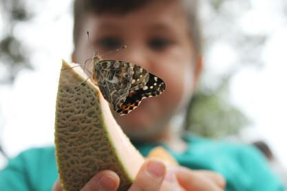 Wimberley's 16th Annual Butterfly Festival