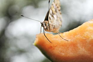 wimberley butterfly festival