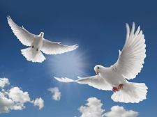 doves1