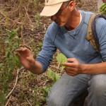 Collecting edible plants