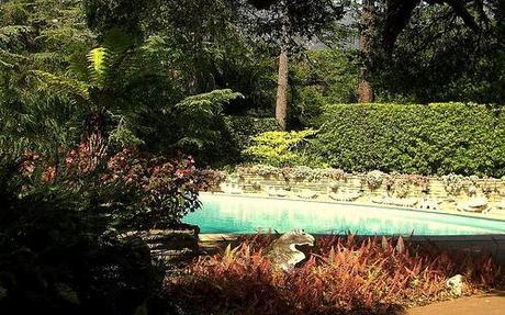 Lotusland Pool